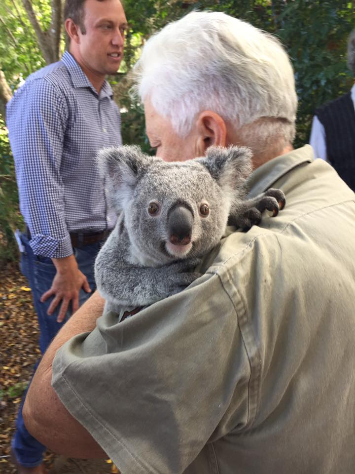 Wild Koala Day Kallangur Community